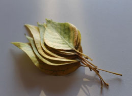 Árbol del bohdi - Quiénes somos | Iro Iro art